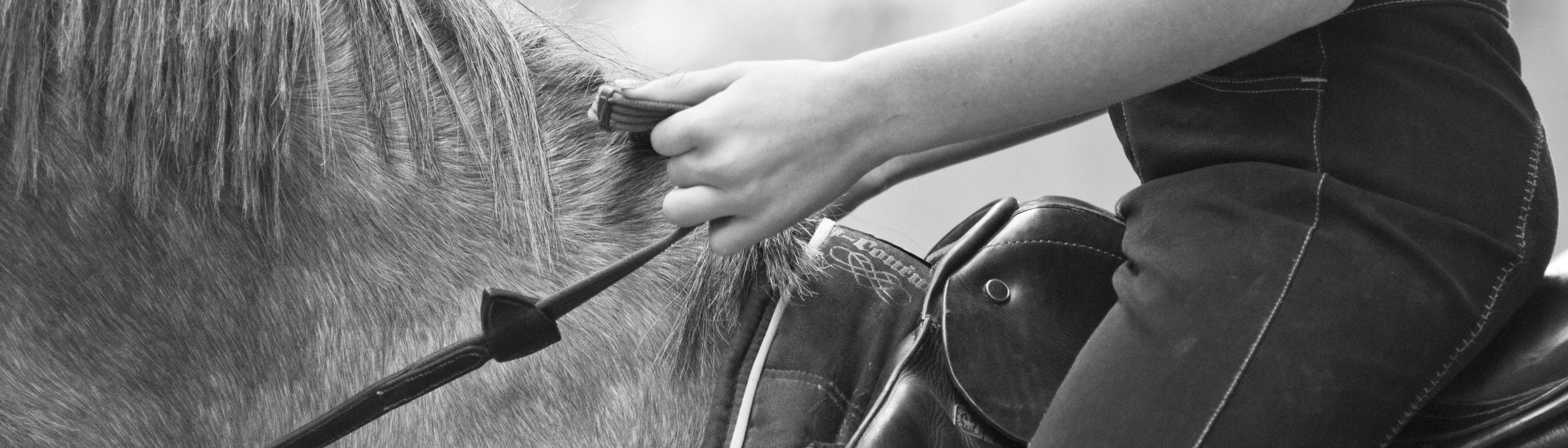 handhouding teugelvoering te paard