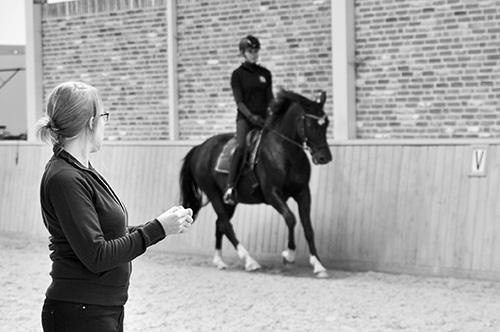hippische sportoefentherapie te paard