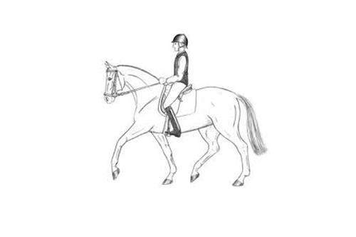 juiste houding en zit te paard met hippische sportoefentherapie in bolsward